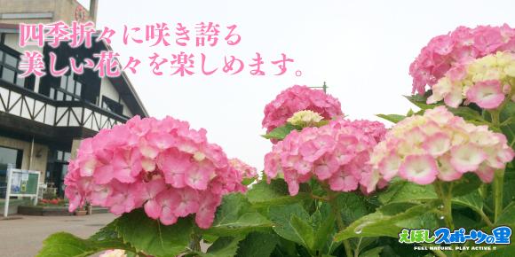 えぼしスポーツの里の園内には様々な花々が植えられており、四季を通じて美しく咲き乱れます。